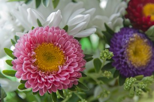 Bouquet of multi-coloured summer flowers